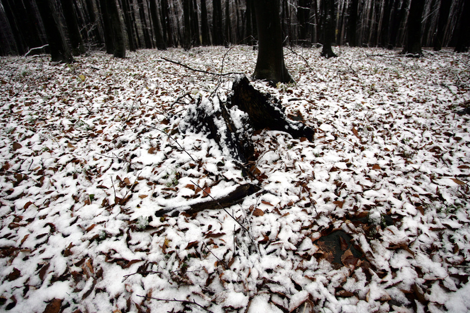 Az Index.hu fotósa által készített fényképen már megidéződik a téli  hangulat  a frissen lehullott őszi faleveleket szépen befedte a nem túl  vastag hóréteg. d2ac146270