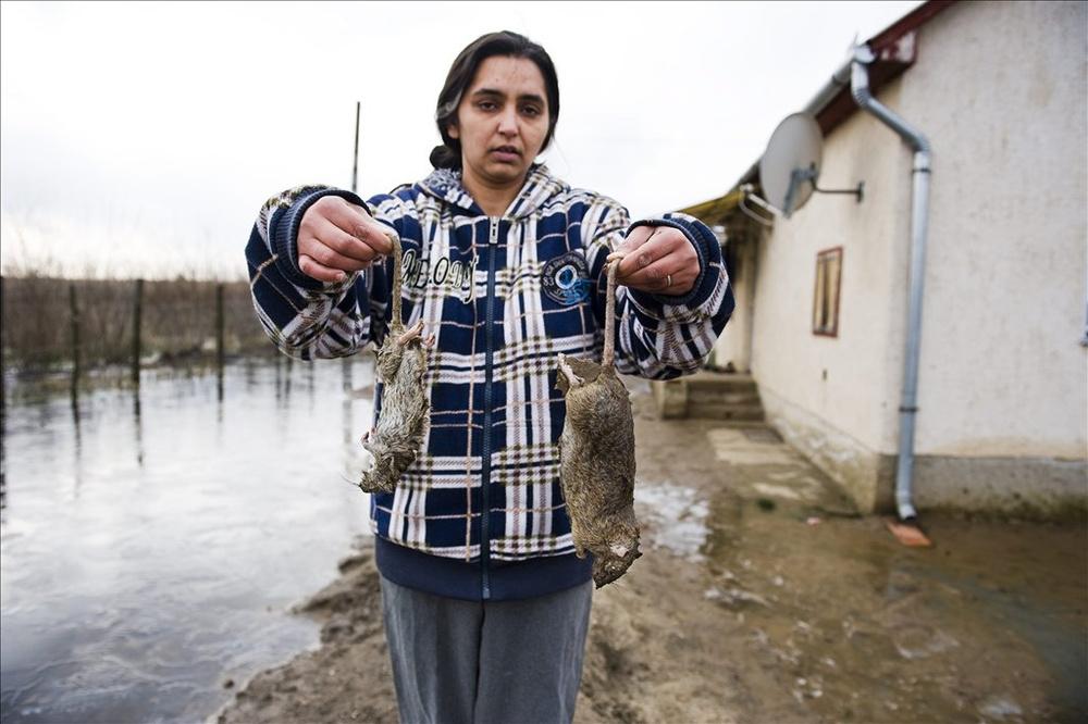 Elpusztult patkányok a belvízzel körbevett ház udvarán a Szabolcs-Szatmár Bereg megyei Hodászon