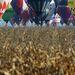 október 12. Minden idők legnépesebb hőlégballon világbajnoksága Debrecenben.   Az index cikke »