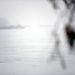 Uszályok rostokolnak a csepeli szabadkikötőnél.