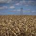 Az egész világban sújtja az aszály a kukoricatermelőket, így a termék ára júliusban 25 százalékkal nőtt