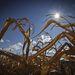 A várt nyolcmillió tonnányi magyar kukorica majdnem felét tönkretehette a szárazság
