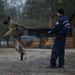 A Rendőrség az EU segítségével idén először kívülről vásárol szolgálati kiképzésre alkalmas kutyákat a Schengen-zóna külső határainak védelmi feladataihoz. A vételre felajánlott német és belga (malinois) juhászkutyákat a dunakeszi kiképzőtelepen szigorú alkalmassági tesztnek vetették alá.