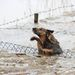 Egy kutya próbál átmászni egy árvízzel elöntött udvar kerítésén