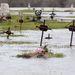 Vízben álló sírok a zagyvarékasi régi temetőben