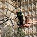 76 fa és 480 négyzetméter cserje kivágására kért és kapott engedélyt tavaly február 24-én V. kerületi önkormányzattól a felújítást kivitelező cég.