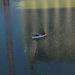 Két ember csónakázik szombaton reggel a Parlament elárasztott mélygarázsában