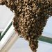 Méhraj Az érdi Iparos utca egyik tölgyfáján még 2008-ban telepedett meg egy több ezer rovart számláló méhraj. A darus kocsival érkező tűzoltók lezárták az utcát, lefűrészelték azt a faágat, amelyen a méhek megtelepedtek, a rovarokat egy méhész kosárba gyűjtötte, majd elszállította.