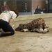 Marokházi Katalin a veszprémi Kittenberger Kálmán Növény-és Vadaspark munkatársa cumisüvegből eteti az állatkert hajnalban született zsiráfborját 2014. március 2-án.