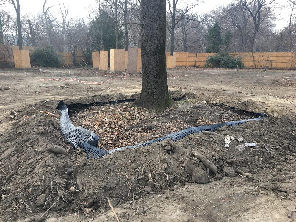 Tavaszi átültetésre előkészített fa