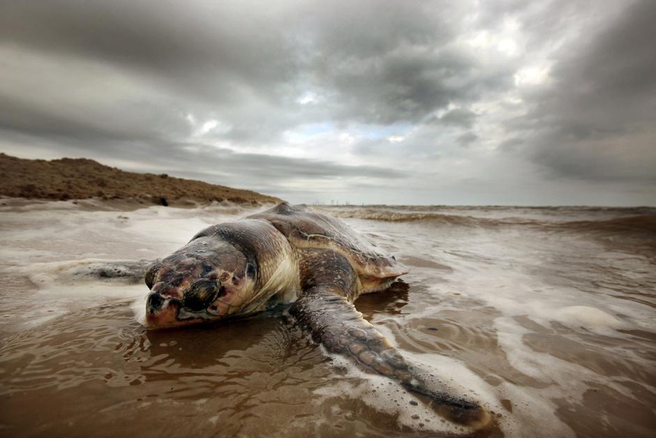 http://galeria.index.hu/kulfold/2011/04/19/egy_ev_telt_el_a_deepwater_horizon_olajfurotorony_katasztrofaja_ota/2065820_5ddbb60ced7e69f4c43fbfc335f1eeb6_l.jpg