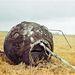 1961. április 12. A Vosztok I. kapszulája Moszkvától 700 kilométerrel dél-keletre ért földet. Gagarin még a földetérés előtt, 7000 méteres magasságban katapultált és ejtőernyővel ért földet.