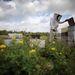 Nem indul vidáman a tavasz a méhészeknek Angliában. Ezrével halnak a méhek, a szakértők nem tudják, mi okozhatja a tömeges pusztulást.