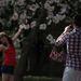Tavaly ünnepelte a város a 100. évfordulóját annak, hogy a Potomac partján elültették az első japán cseresznyefákat