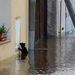 Macska a vízben, a csehországi Melnik melletti Klyben.