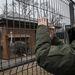 Nem csak haszonállatokat tartott az ukrán elnök, rengeteg díszállatot, struccot, még antilopokat is láttak a tüntetők.
