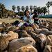 A szigetet a Nyulak szigetének is nevezik, mert elözönlötték a nyulak. Magának a szigetnek amúgy nem túl szép a története. A II. Világháború idején például harci mérgező gázokat gyártottak itt, amit aztán Kínában vetettek be.