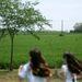 Kilátás a parkból