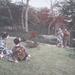 Gésák a kertben