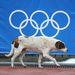 A szocsi olimpia eddig a melegellenes törvények miatt került középpontba, számos emberjogi szervezet tiltakozott ellene, most pedig már az állatvédők is nekimentek a játékok szervezőinek, akik hajtóvadászatot rendeztek a kóbor kutyák ellen.