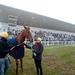 Completta (képünkön) kapta az Év magyar tenyésztésű galopp lova díjat, az év lova Latin Lover lett.