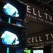 A Toshibánál minden a Cell TV-ről szól