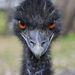 Szigorú tekintetIII. díjKategória: FotoZoo-kézhez szokott vadállatok