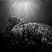 ZátonyIII. díjKategória: Élet a vízfelszín alatt