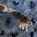 Békamama I. díjKategória: Élet a vízfelszín alatt