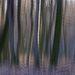 Táncoló erdőII. díjKategória: Kompozíció, forma és kísérletezés