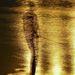 Horgász az aranyló folyó partjánI. díjKategória: Kompozíció, forma és kísérletezés