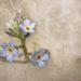 A szöszfürdőIIII.díjKategória: Növények és gombák
