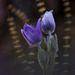 KettenI. díjKategória: Növények és gombák