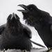 HollópárSakerTour különdíjaKategória: Az állatok szemtől szemben