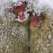 MelegedésA Vadon természetvédelmi magazin különdíja 2009-ben Kategória:  Az emlősök viselkedése