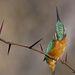 FegyverekII. díjKategória:  A madarak viselkedése