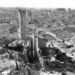 A gettó romjai, 1943.