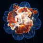 Villamosszékben felrobbantott pattogatott kukorica? Kékre rohasztott karfiol? Egyik sem, ez még mindig csak egy szakállas medúza.