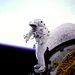 1993. szeptember 16. STS-51: James H. Newman hordozható lábtartót tesztel.